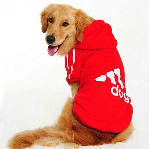 Artykuły dla psa na Aliexpress