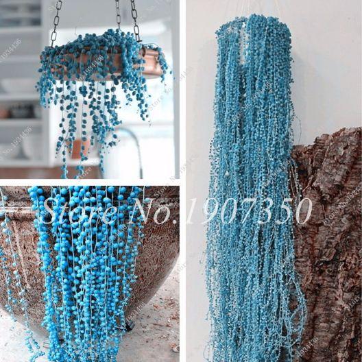 aliexpress chlorophytum nasiona
