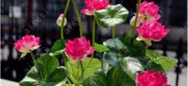 6 Najlepszych Roślin Z Aliexpress