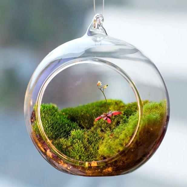 aliexpress szklane terrarium