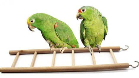 aliexpress drabinka dla ptaków